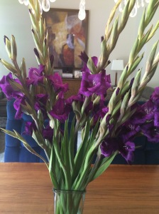 purple, color, gladiolas, flowers, rich, velvet, home